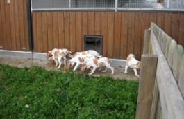 Giardino esterno per ricreazione cuccioli adiacente alla sala parto