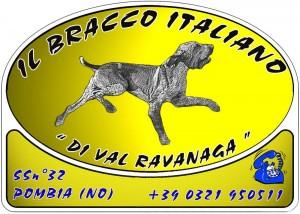 Il Bracco Italiano di Val Ravanaga