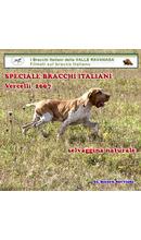 Prove di lavoro in Piemonte Vercelli: Bracchi in prove di lavoro