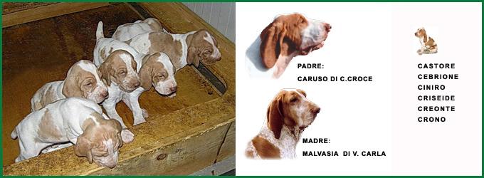 06_Caruso-x-Malvasia