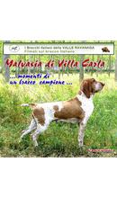 Momenti magici di un bracco campione Filmato interamente dedicato a Malvasia di Villa Carla CH IT di bellezza CH IT di lavoro CH INT di lavoro CH assoluto